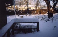 Ah, January in the Ozarks -- snow-filled back yard